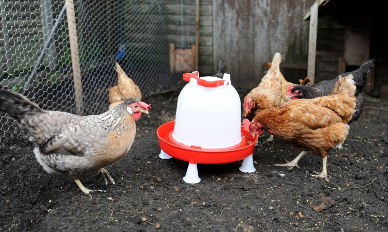 Chicken Feeder Comb